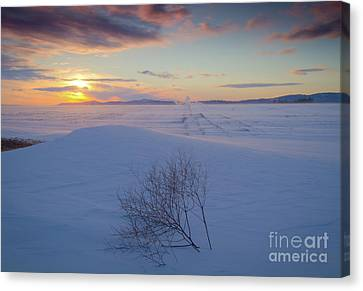 Tumble In The Snow Canvas Print by Idaho Scenic Images Linda Lantzy