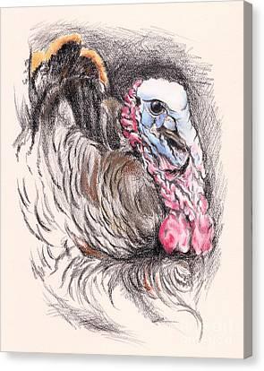 Turkey Tom Canvas Print by MM Anderson