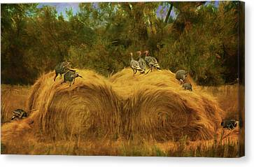 Turkeys In The Straw - 2 Canvas Print by Nikolyn McDonald