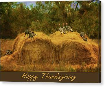 Turkeys In The Straw - Happy Thanksgiving Canvas Print by Nikolyn McDonald