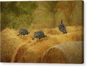 Turkeys In The Straw Canvas Print by Nikolyn McDonald