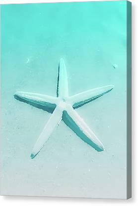 Turquoise Starfish 1 Canvas Print by Heather Joyce Morrill