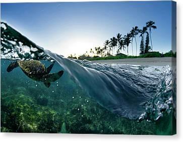 Turtle Split Canvas Print by Sean Davey