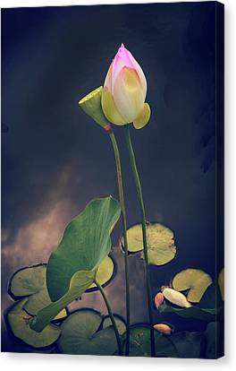 Twilight Lotus Pond Canvas Print by Jessica Jenney