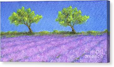 Twin Oaks And Lavender Canvas Print by Jerome Stumphauzer