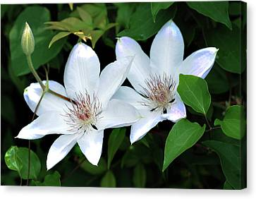 Twins  Canvas Print by Don  Wright