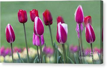 Two Lips Canvas Print by David Millenheft