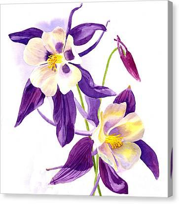 Two Purple Columbine Flower Square Design Canvas Print by Sharon Freeman