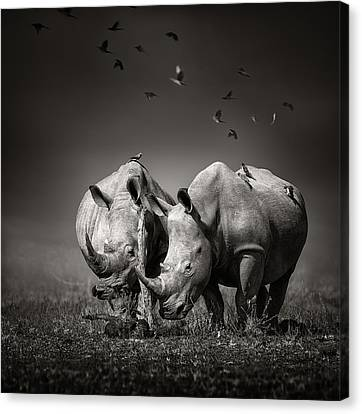 Two Rhinoceros With Birds In Bw Canvas Print by Johan Swanepoel