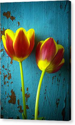Two Tulips Against Blue Wall Canvas Print by Garry Gay