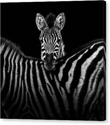 Two Zebras In Black And White Canvas Print by Lukas Holas