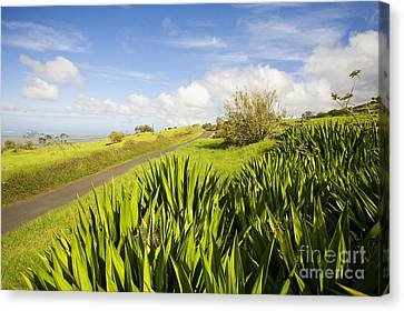 Ulupalakua Country Road Canvas Print by Ron Dahlquist - Printscapes