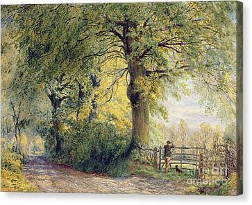 Under The Beeches Canvas Print by John Steeple