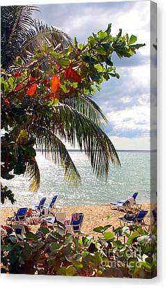 Under The Palms In Puerto Rico Canvas Print by Madeline Ellis