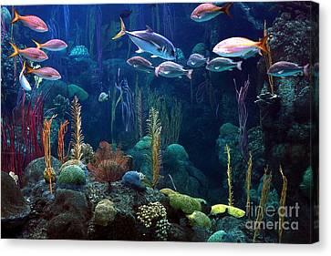 Under The Sea 3 Canvas Print by Randy Matthews
