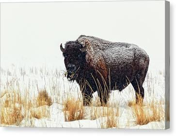 Under The Snow Canvas Print by Joan Escala