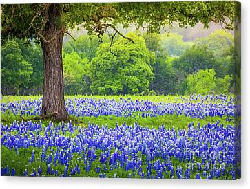 Under The Tree Canvas Print by Inge Johnsson