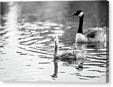 Under The Watchful Eye Canvas Print by Scott Pellegrin