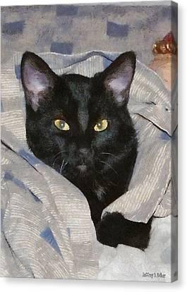 Undercover Kitten Canvas Print by Jeff Kolker