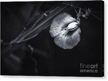 Unknown Beauty Canvas Print by Marvin Spates