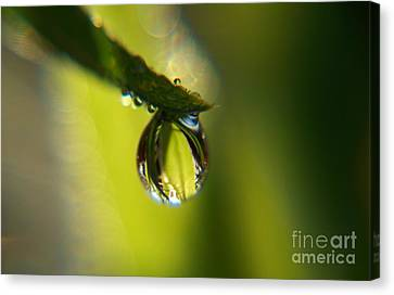 Unseen Canvas Print by Sally Siko