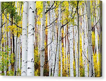 Uphill Canvas Print by The Forests Edge Photography - Diane Sandoval