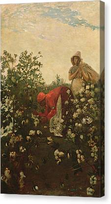 Upland Cotton Canvas Print by Winslow Homer