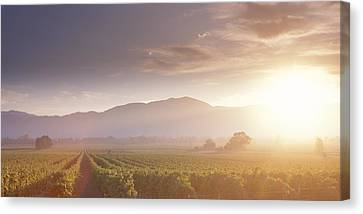 Usa, California, Napa Valley, Vineyard Canvas Print by Panoramic Images