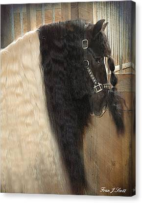 Valentino's Mane Canvas Print by Fran J Scott