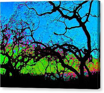 Variations 1 Canvas Print by Tim Tanis