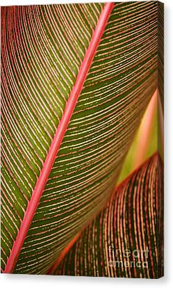 Variegated Ti-leaf 1 Canvas Print by Ron Dahlquist - Printscapes