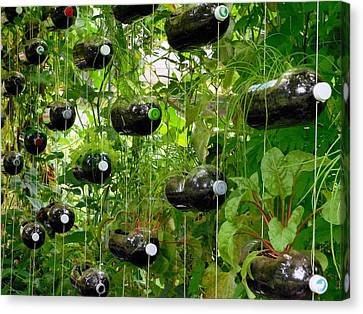 Vegetable Growing In Used Water Bottle 1 Canvas Print by Lanjee Chee