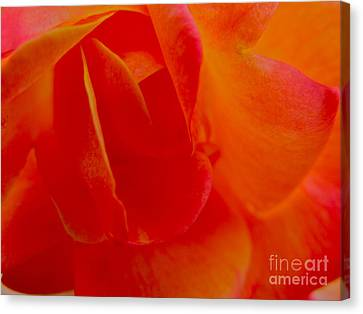 Velvet Touch Canvas Print by PJ  Cloud