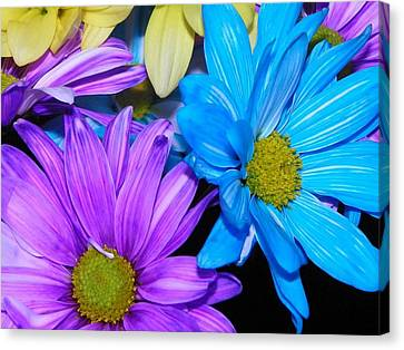 Very Colorful Flowers Canvas Print by Christy Patino