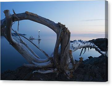 View Through Driftwood At Sunrise Canvas Print by James Smedley