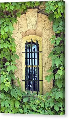 Vined Window I Canvas Print by Mark Harrington
