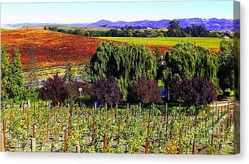 Vineyard 5 Canvas Print by Xueling Zou