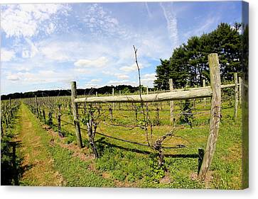 Vineyard Fence Canvas Print by Brian Manfra