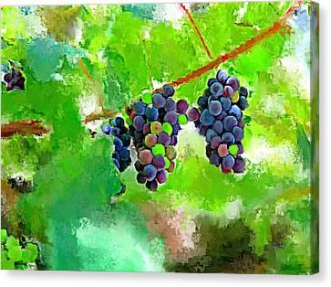 Vineyard Grapes Canvas Print by Tim Tompkins