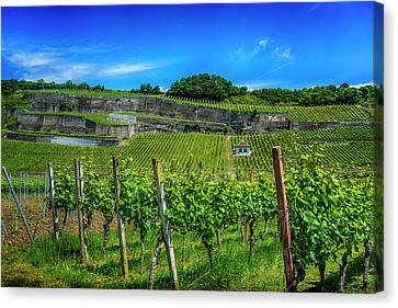 Vineyard In Baden-wueberg Germany_dsc7653_16 Canvas Print by Greg Kluempers