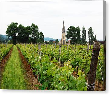 Vineyard In France Canvas Print by Marion McCristall