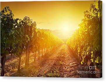 Vineyard Landscape In Tuscany Canvas Print by Michal Bednarek