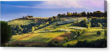 Vineyard, Near San Gimignano  Tuscany Canvas Print by Yves Marcoux