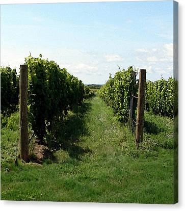 Vineyard On The Peninsula Canvas Print by Michelle Calkins
