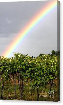 Vineyard Rainbow Canvas Print by Laurel Sherman