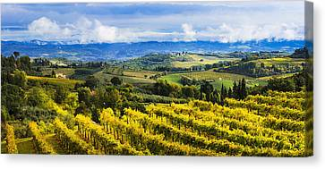Vineyard  San Gimignano, Tuscany, Italy Canvas Print by Yves Marcoux