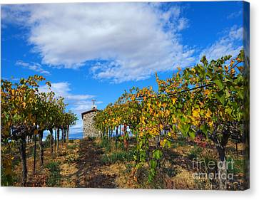 Vineyard Temple Canvas Print by Mike Dawson