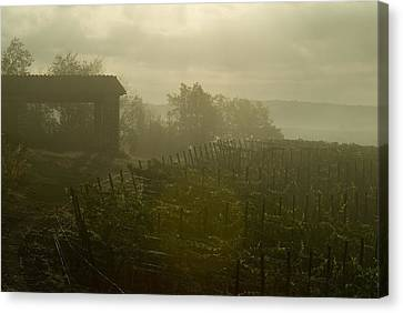 Vineyards Beside A Villa In The Fog Canvas Print by Todd Gipstein