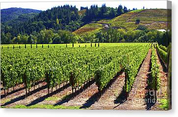 Vineyards In Sonoma County Canvas Print by Charlene Mitchell