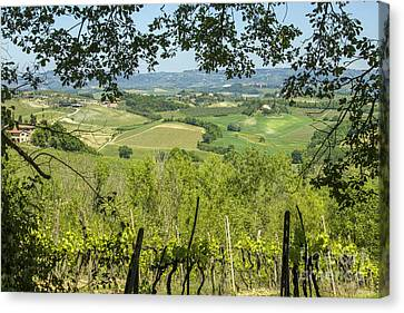 Vineyards In Tuscany Landscape Canvas Print by Patricia Hofmeester